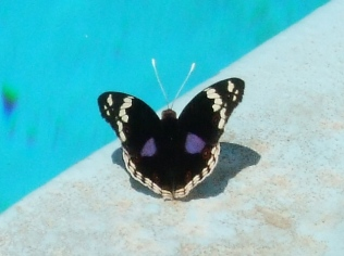 This beauty was sunning herself by the pool